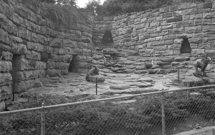Pittsburgh Zoo Bear exhibit.jpg