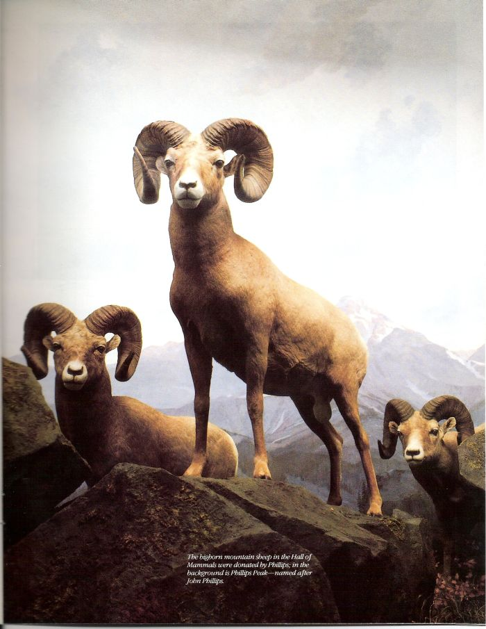 Fantastisch Bighorn Sheep Anatomy Galerie - Menschliche Anatomie ...
