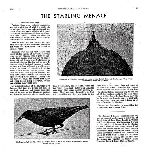 The starling menage page 3.jpg